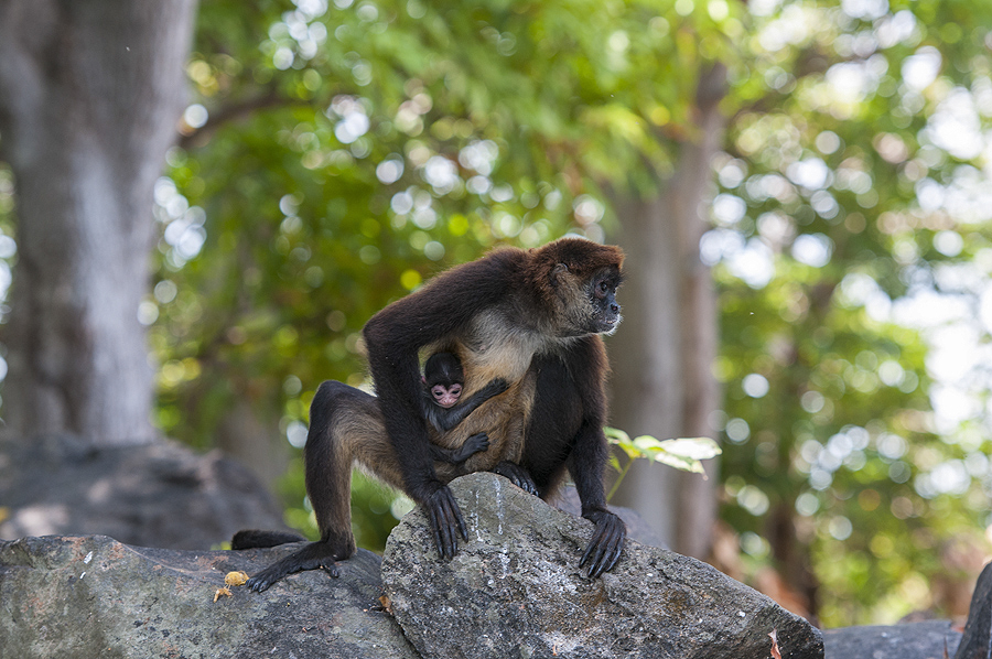 It is not uncommon to see monkeys throughout the islands. Photo: ISA/Rommel Gonzales